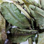Decotop-Guava-green