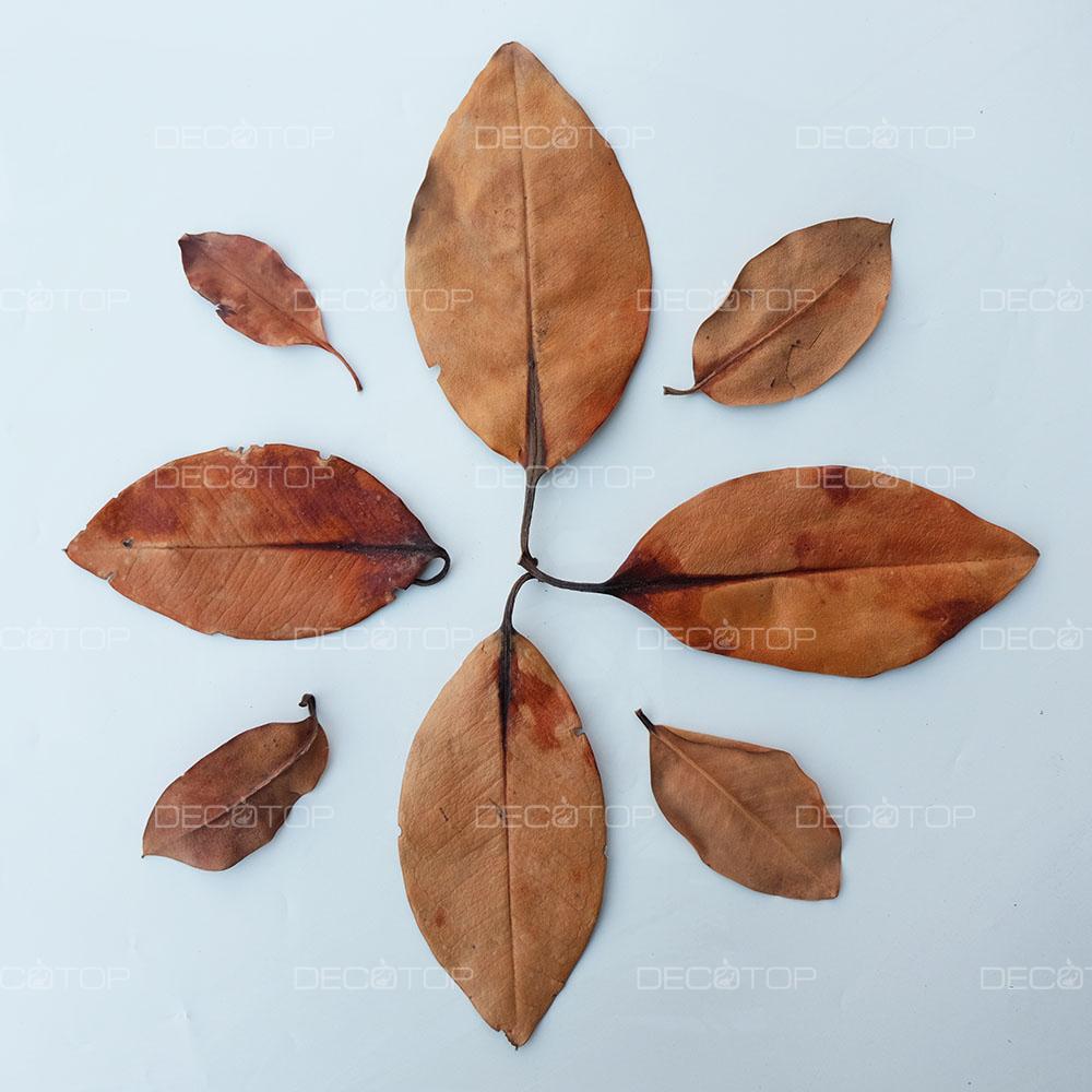 DECOTOP Mangrove XS – Листья мангры, 10-15 см, 10 шт.