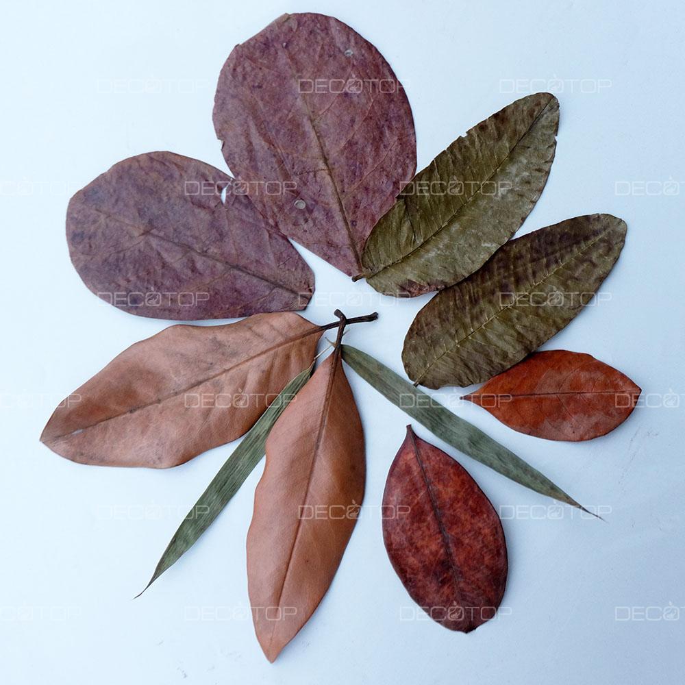DECOTOP Organic Kit S 1 – Набор тропических листьев 5-20 см, 10 шт.